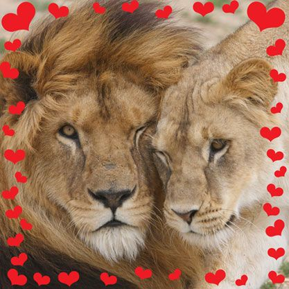 Lions hearts